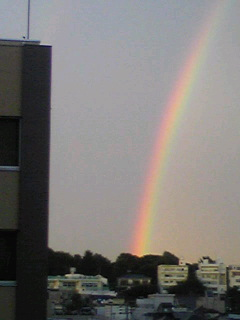 あ、また虹♪