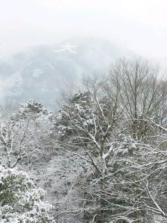 窓からの雪景色