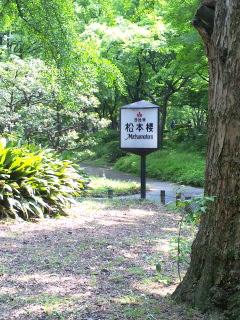 日比谷公園の松本楼