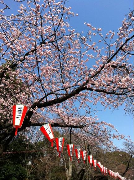 では桜、もう一枚